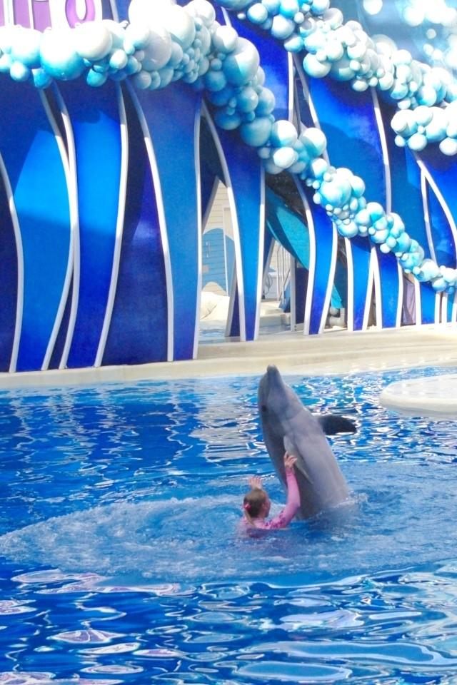 15 jours en Floride : seaworld, IOA, animal kingdom et discovery cove Voyage39