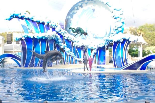15 jours en Floride : seaworld, IOA, animal kingdom et discovery cove Voyage40