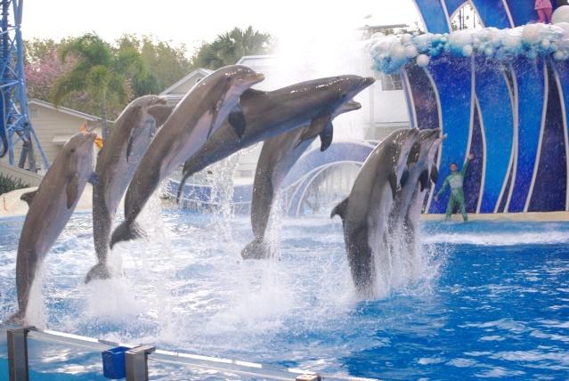 15 jours en Floride : seaworld, IOA, animal kingdom et discovery cove Voyage43