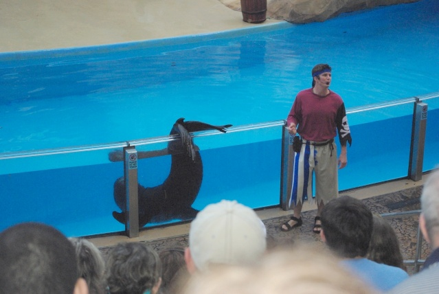 15 jours en Floride : seaworld, IOA, animal kingdom et discovery cove Voyage45