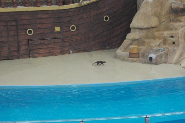 15 jours en Floride : seaworld, IOA, animal kingdom et discovery cove Voyage46