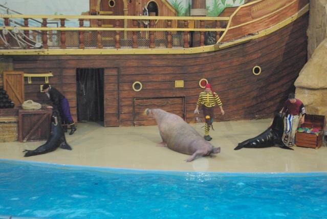 15 jours en Floride : seaworld, IOA, animal kingdom et discovery cove Voyage47