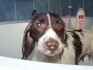 Premier bain (25 juillet 2008) Bain10