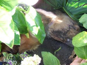 TCHARA creuse son trou (24 juin 2008) Cachee11