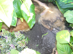 TCHARA creuse son trou (24 juin 2008) Cachee12