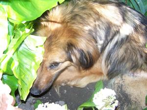 TCHARA creuse son trou (24 juin 2008) Cachee14