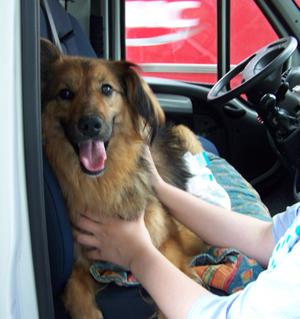 Arrivée de TCHARA (17 juin 2008) Camion10