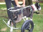 HandicappedPets.com Chario10
