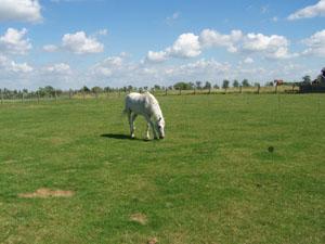 Rencontre avec les chevaux (14 juillet 2008) Cheval10