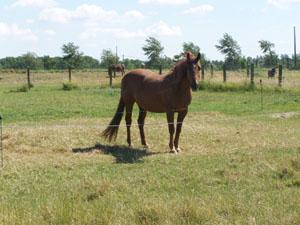 Rencontre avec les chevaux (14 juillet 2008) Cheval12