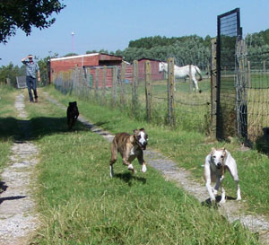 Rencontre avec les chevaux (14 juillet 2008) Course11
