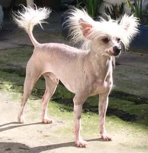 Pourquoi un nombre de chiens limité Debout10