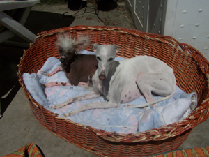 Après-midi de bronzage et de grignotage (26 juin 2008) Deux-b11