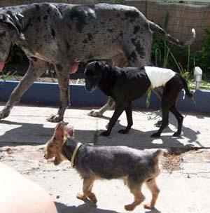 Un bel après-midi au soleil (23 mai 2008) Doguey10