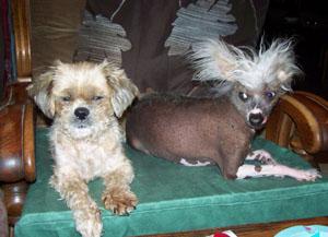 AU DODO (21 juillet 2008) Fauteu10