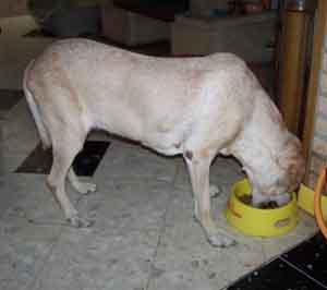 Les gamelles (3 août 2008) Julie10