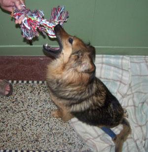 TCHARA a reçu un cadeau (3 juillet 2008) Noeud-11