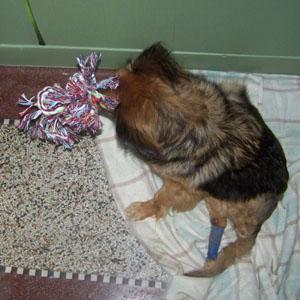 TCHARA a reçu un cadeau (3 juillet 2008) Noeud-12