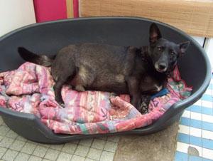 MIKI prend ses aises (18 juillet 2008) Panier22