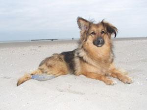 TCHARA à la plage (19 juillet 2008) Plage-13