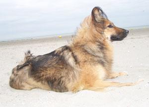 TCHARA à la plage (19 juillet 2008) Plage-15