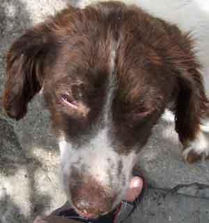 Arrivée de DALLYA (24 juillet 2008) Tete-310