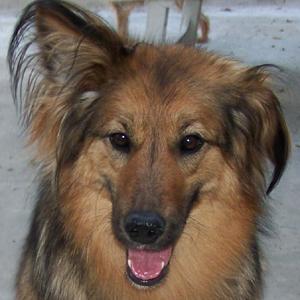 Rendez-vous vétérinaire pour TCHARA (29 juin 2008) Tete-f11