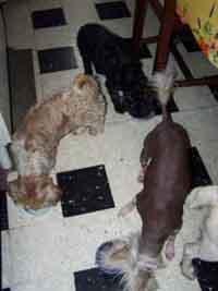 Les gamelles (3 août 2008) Trois11