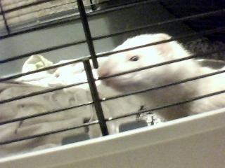 notre ami le furet  Pic-2011