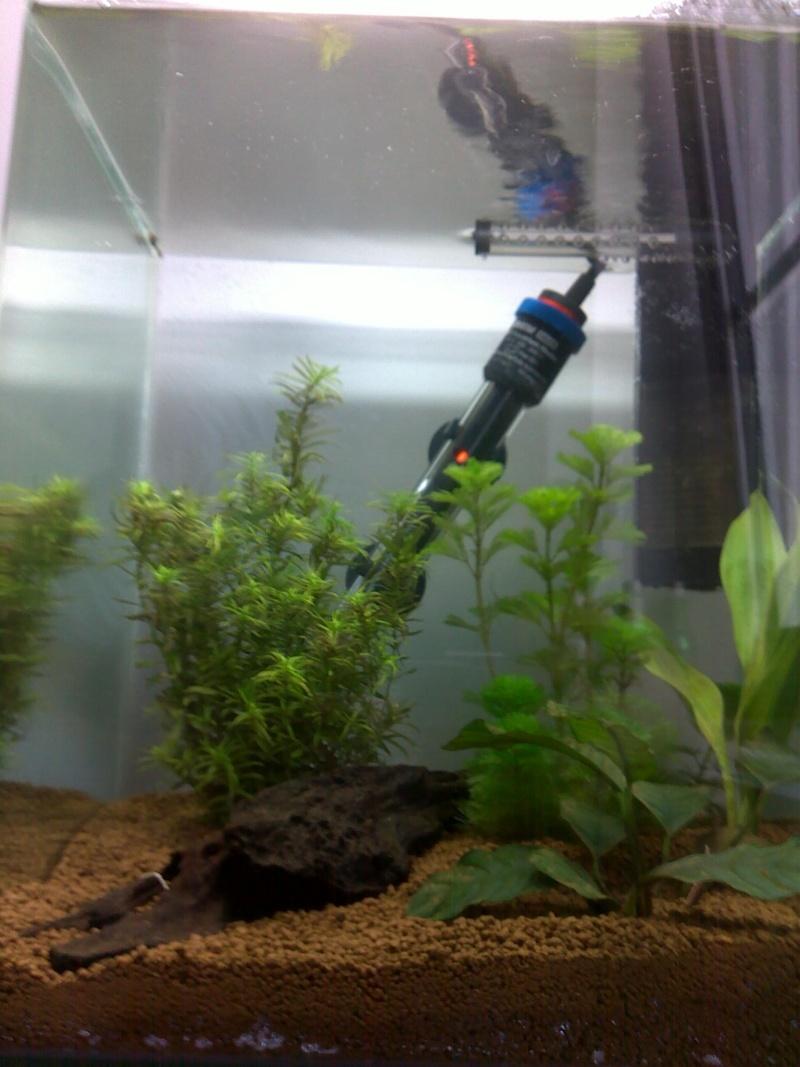 Mon nano aquarium 30L 07082010