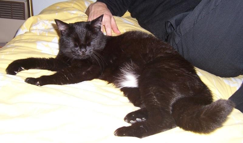 Lily, notre panthère noire.... (anciennement Lydie 2007) - Page 7 Lily210