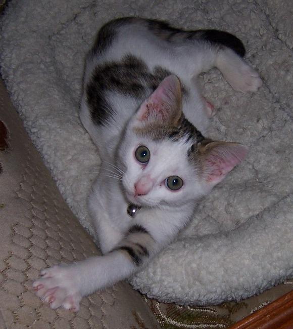 Lily, notre panthère noire.... (anciennement Lydie 2007) - Page 7 Nougat10