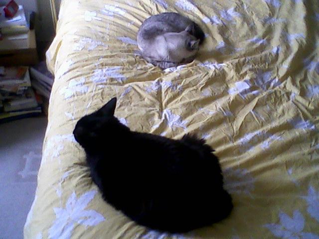 Lily, notre panthère noire.... (anciennement Lydie 2007) - Page 7 Prise_11