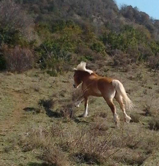 "Concours : ""cheval au galop"" GAGNANTE : TItâne - Page 2 Photo021"
