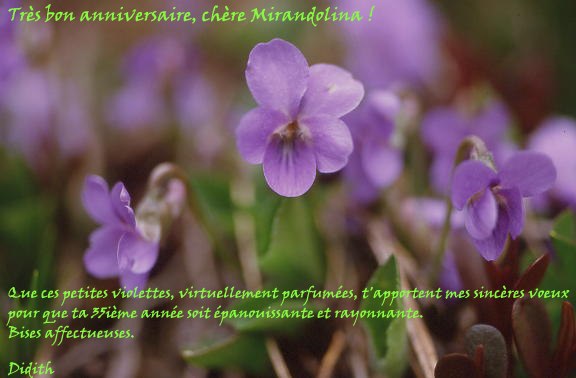 MIRANDO Annivm10