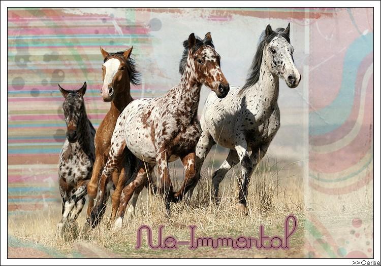 No Immortal
