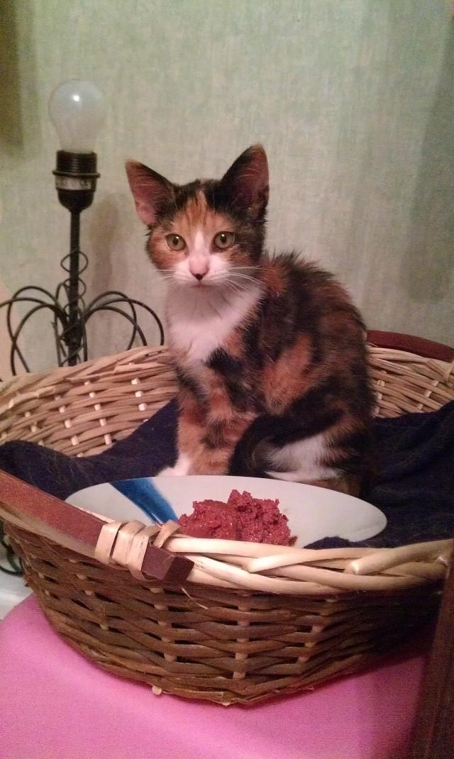 Canelle, chatte tricolore, née le 1 juillet 2011 - Page 5 Imag0716