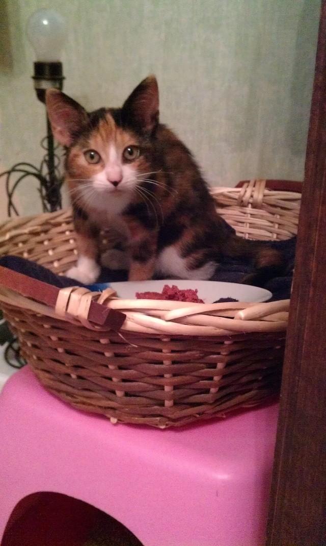 Canelle, chatte tricolore, née le 1 juillet 2011 - Page 5 Imag0717