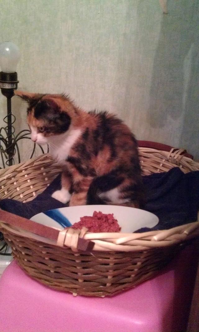 Canelle, chatte tricolore, née le 1 juillet 2011 - Page 5 Imag0718