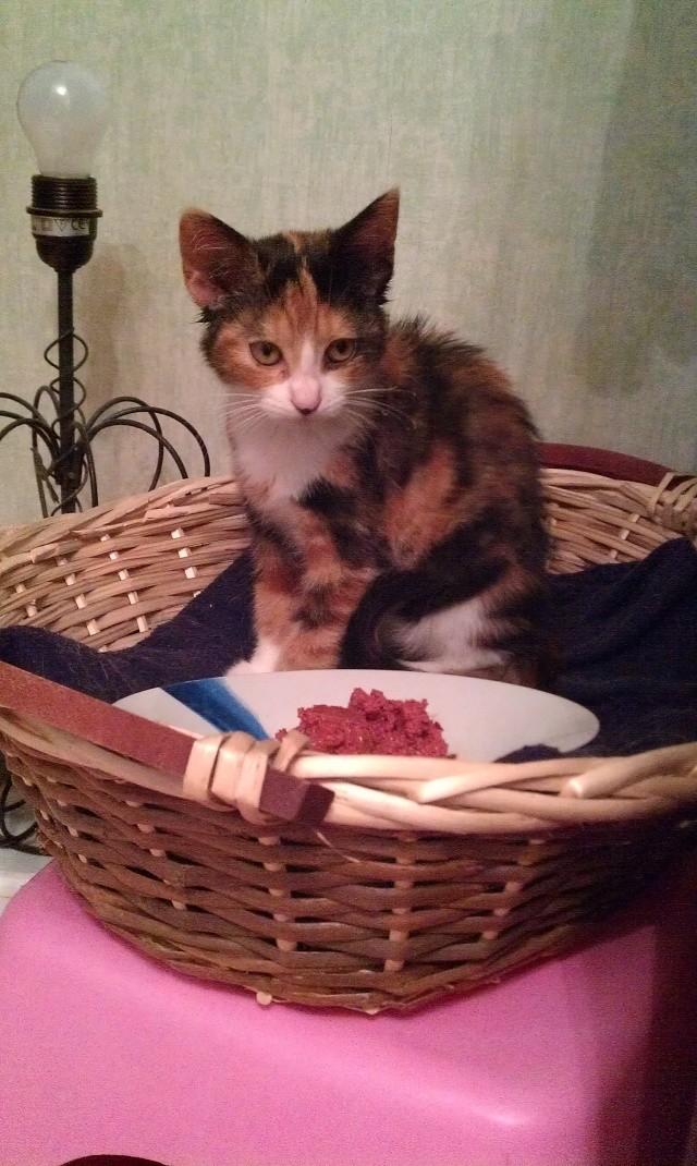 Canelle, chatte tricolore, née le 1 juillet 2011 - Page 5 Imag0719