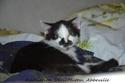 Besoin d'une famille d'accueil pour 3 chatons, âge et couleur inconnu Masha_11