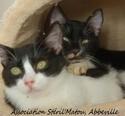 Besoin d'une famille d'accueil pour 3 chatons, âge et couleur inconnu Matt_e11