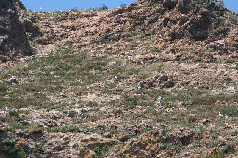 Mergulho nas Berlengas 28JUN2008 Img_6355