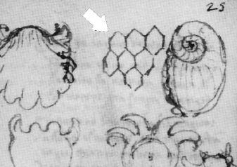 Quand Léonard de Vinci décode les fossiles Rtemag10