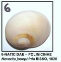 Gasteropodes actuels du NE Espagne (côte de Tarragona) 06g10