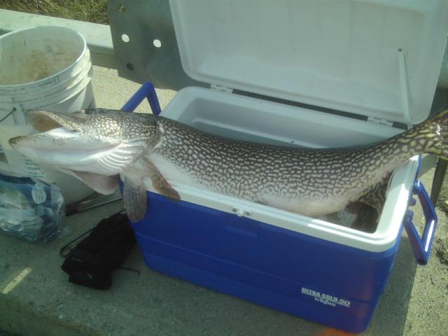 Première pêche de l'année Broche10