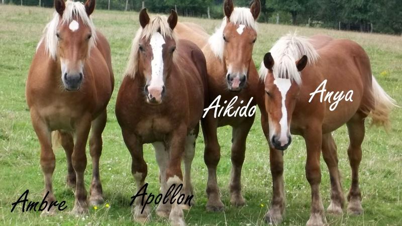 Dpt 70, Avalon, Artiste (Décédé 2015) et Aikido, ONC trait, sauvés par py (Août 2011) 106_0114