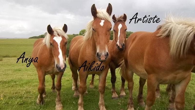 Dpt 70, Avalon, Artiste (Décédé 2015) et Aikido, ONC trait, sauvés par py (Août 2011) 106_0116
