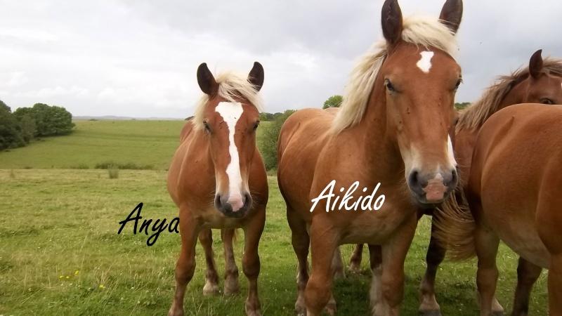 Dpt 70, Avalon, Artiste (Décédé 2015) et Aikido, ONC trait, sauvés par py (Août 2011) 106_0118