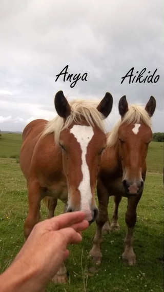 Dpt 70, Avalon, Artiste (Décédé 2015) et Aikido, ONC trait, sauvés par py (Août 2011) 106_0127